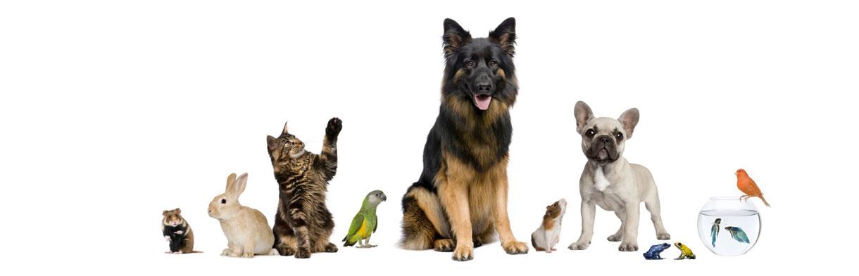 animaux2